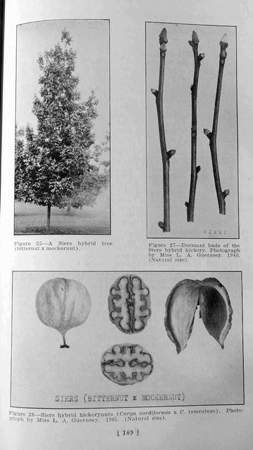 Fig.5
