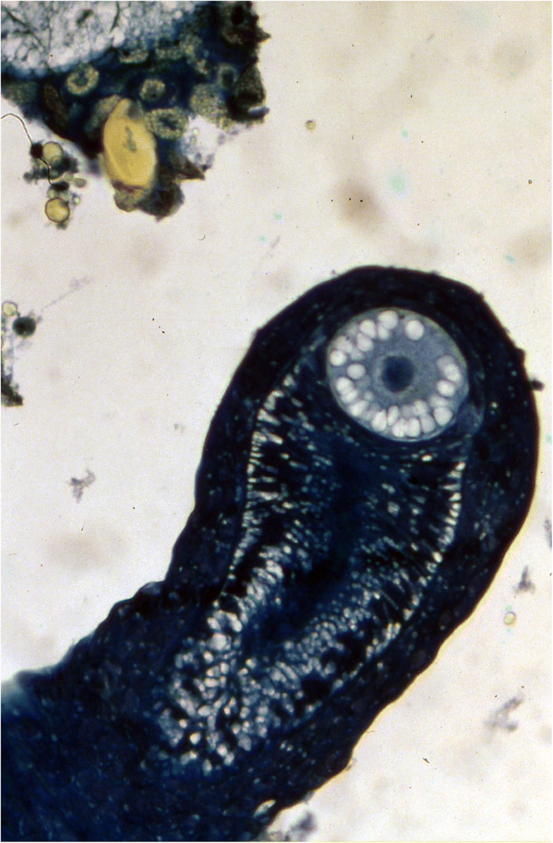 Fig. 9