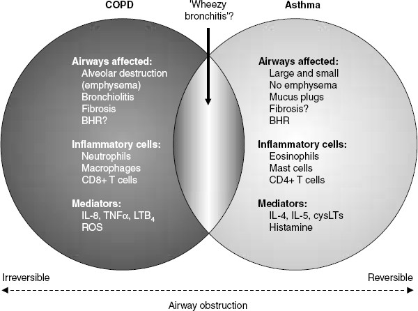 Therapy For Chronic Obstructive Pulmonary Disease In The 21st