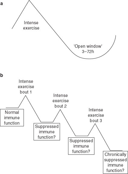 Overtraining Excessive Exercise And Altered Immunity