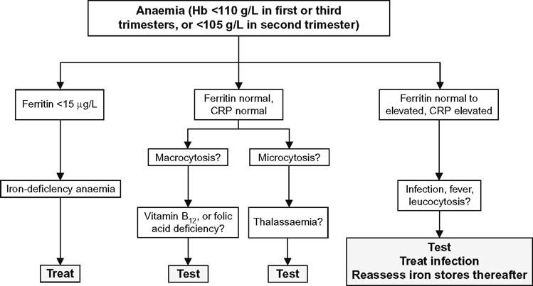 Assessment and Differential Diagnosis of Iron-Deficiency