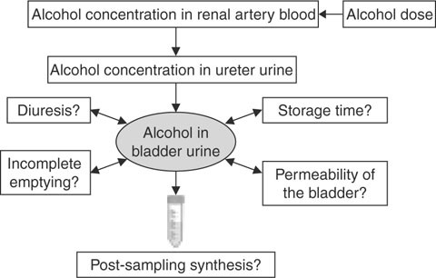 Urine as a biological specimen for forensic analysis of alcohol and open image in new window fig 1 schematic diagram of factors likely to influence the concentration of alcohol fandeluxe Image collections