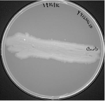 Figure 4A.