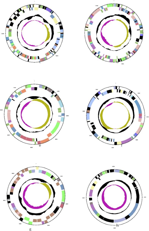 Figure 3c–h.