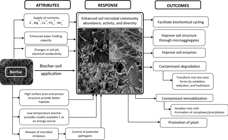response of microbial communities to biochar