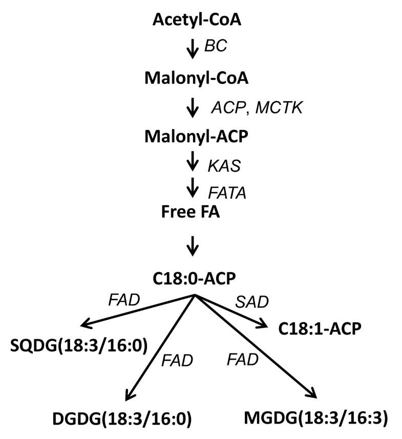Monogalactosyldiacylglycerol
