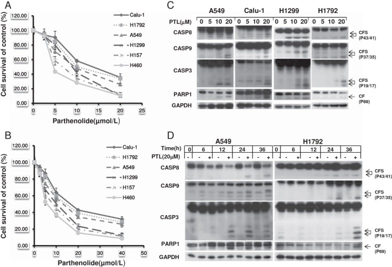 Parthenolide Induces Apoptosis Via Tnfrsf10b And Pmaip1