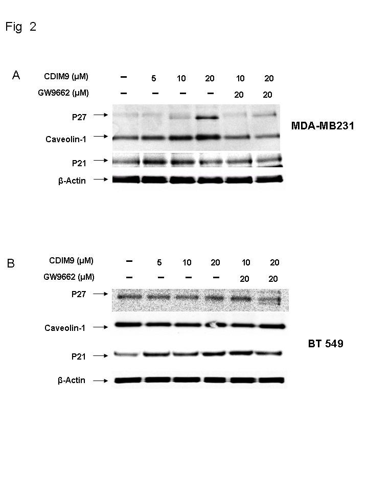 (PDF) Inhibition of basal-like breast cancer growth by