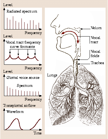 The Human Voice in Speech and Singing | SpringerLink