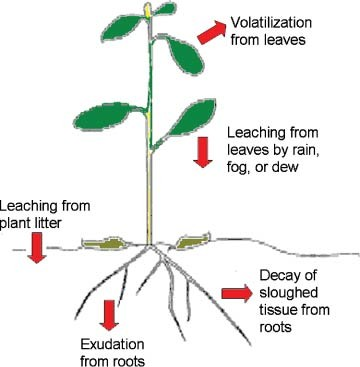 Ecological Biochemistry: Allelopathy and Defense Against