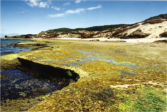 Victoria: The Nepean Ocean Coast (Point Nepean to West Head