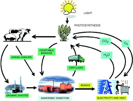 Plants As Sources Of Energy SpringerLink