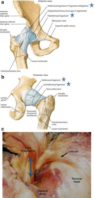Layered Concept of the Hip and Pelvis | SpringerLink