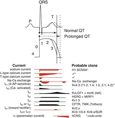 Drug-Induced QT Prolongation | SpringerLink