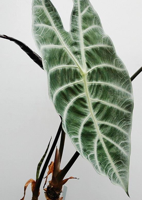Section 5 Individual Plants Springerlink