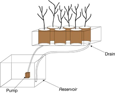Using Hydroponic Bioreactors to Assess Phytoremediation