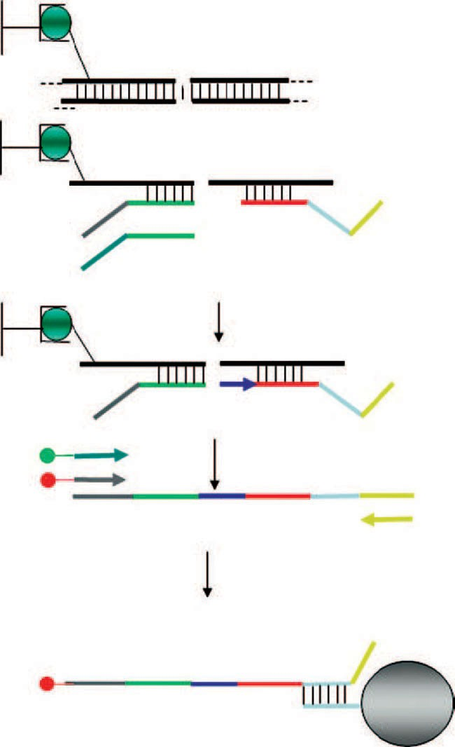 BeadArray-Based Genotyping   SpringerLink