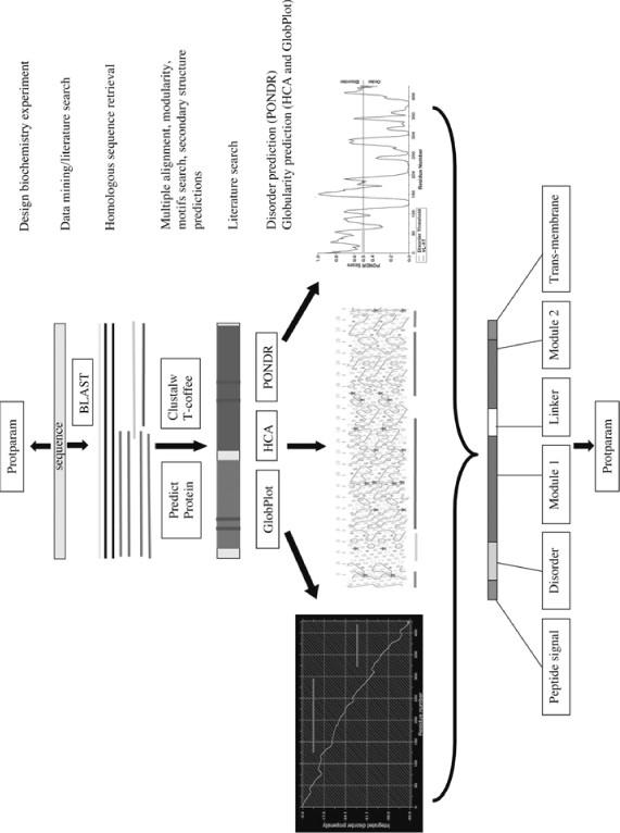 Protein engineering springerlink open image in new window fandeluxe Images