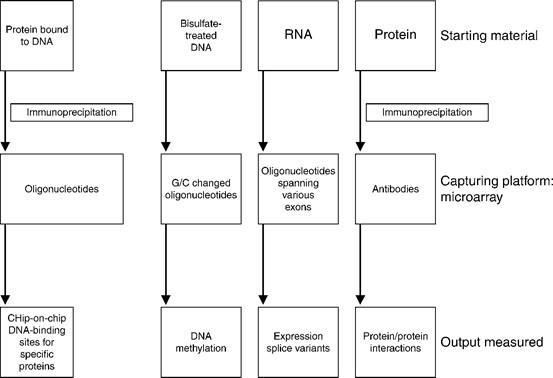 Uses of Microarray Platforms in Cancer | SpringerLink