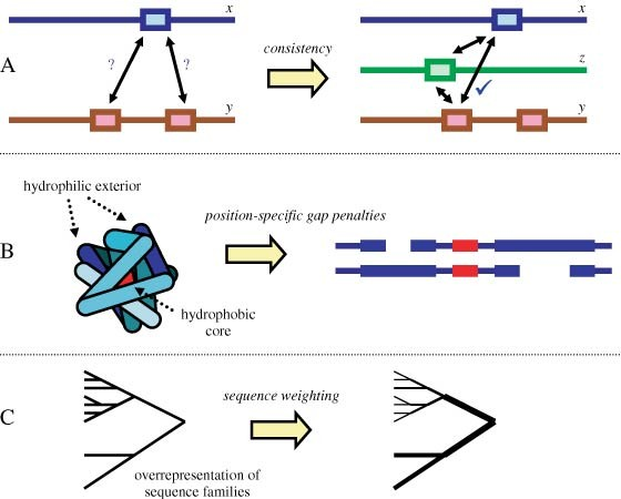 Protein Multiple Sequence Alignment   SpringerLink