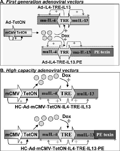 Regulated Expression of Adenoviral Vectors-Based Gene Therapies