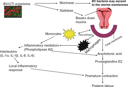 The Impact of Probiotics on Maternal and Child Health