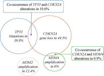 p53 Pathway Alterations in Brain Tumors | SpringerLink