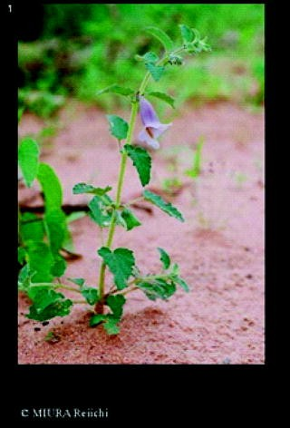 Antiviral Potential of Vegetables: Can They be Cost-Effective Agents