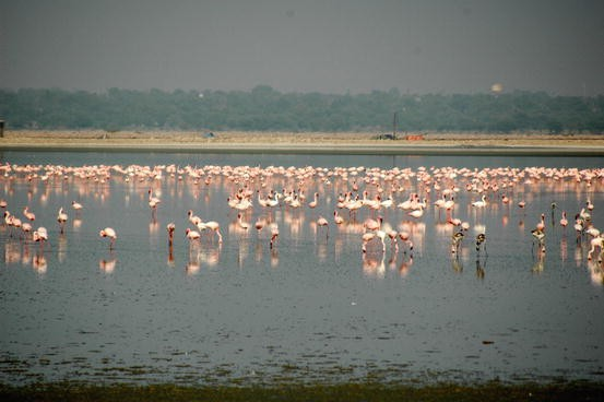 The Ramsar Sites of Rajasthan: Ecology and Conservation of