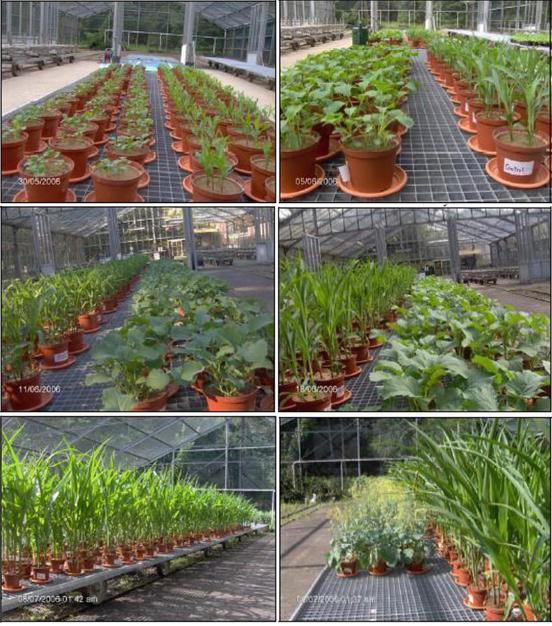 Plant Nutrition: From Liquid Medium to Micro-farm | SpringerLink