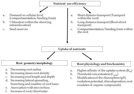 Nutrient Management Perspectives In Conservation Agriculture