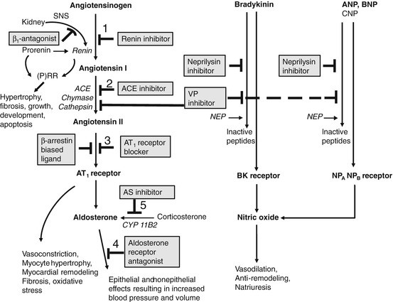Drugs Targeting RAAS in the Treatment of Hypertension and