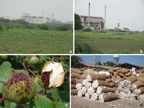 Phytoremediation Crops and Biofuels | SpringerLink