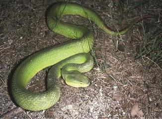 Asian Snakes | SpringerLink
