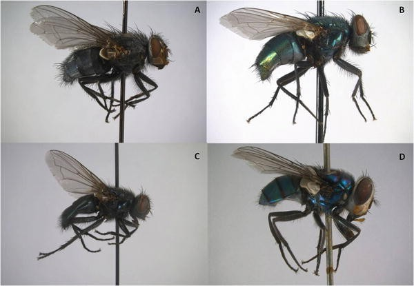 Advances in Forensic Entomology in Missing Persons