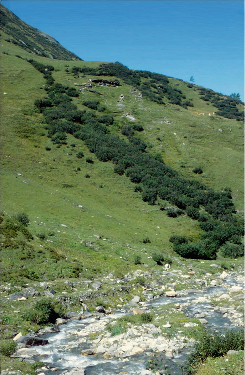 vegetation of the alpine and nival belts | springerlink