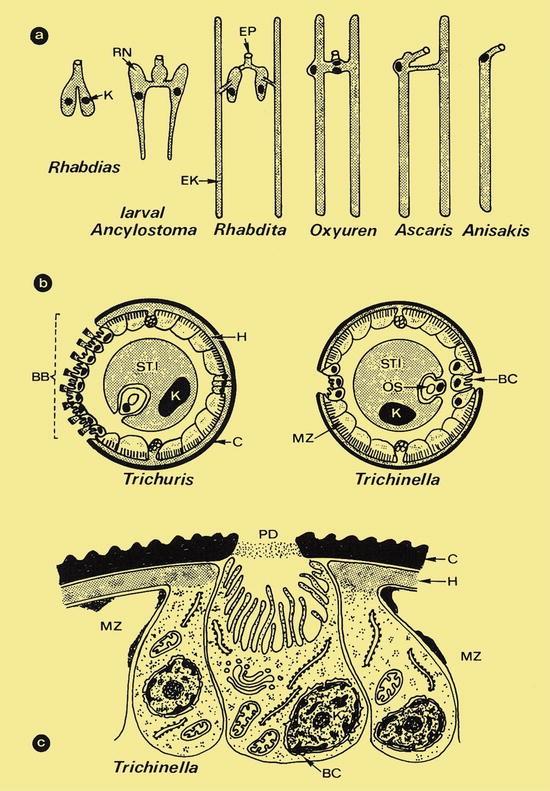 Worms (Helminths) | SpringerLink