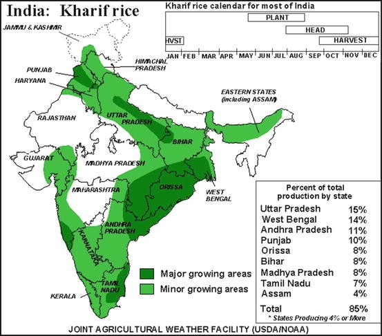 Rice Production in India | SpringerLink