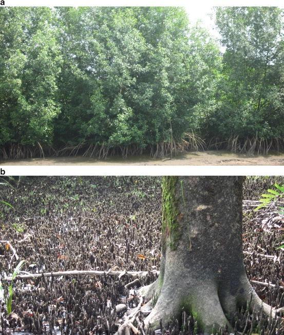 Mangrove Ecosystems