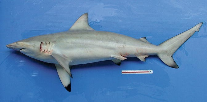 Biting and Predator Fish Group | SpringerLink