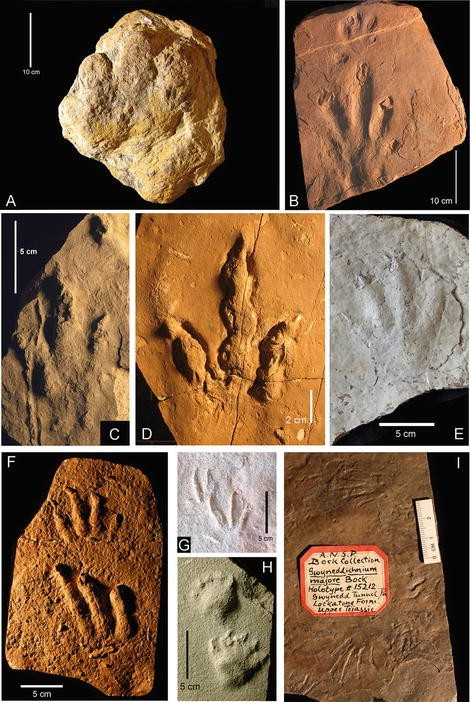 Terrestrial trace-fossils