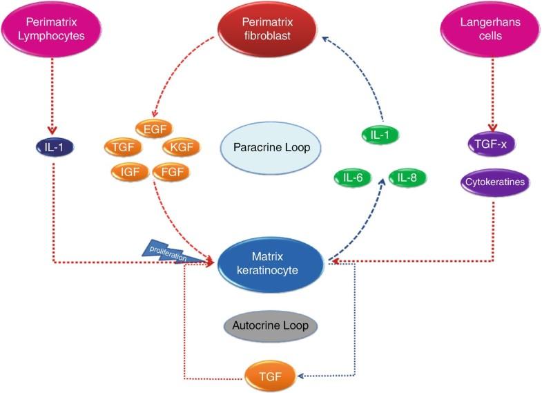 Cholesteatoma | SpringerLink