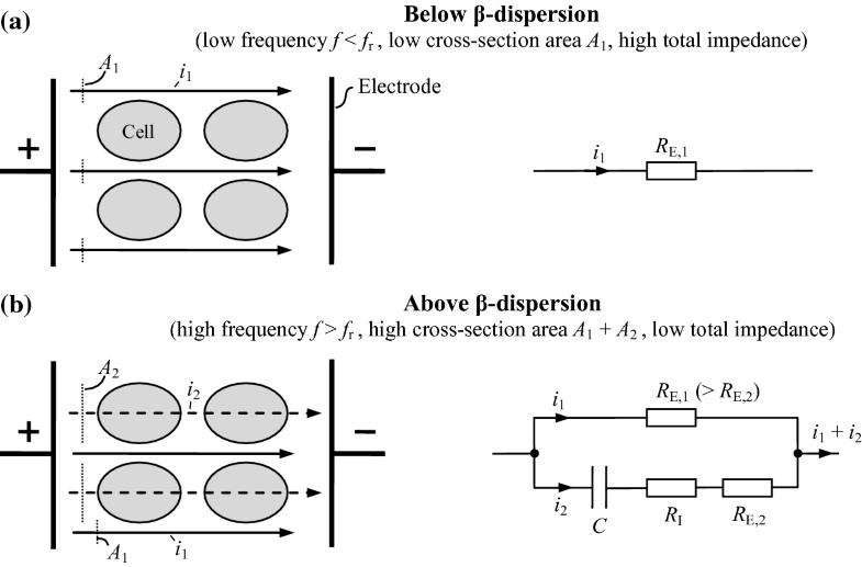 Formation of Electric Biosignals | SpringerLink