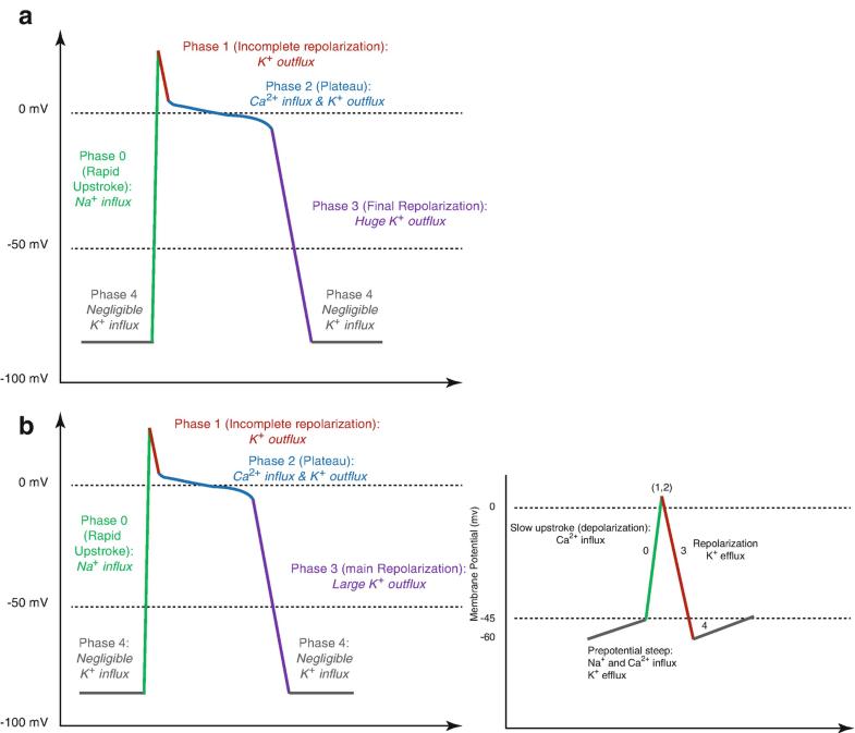 Cymbalta 30 mg vs 60 mg