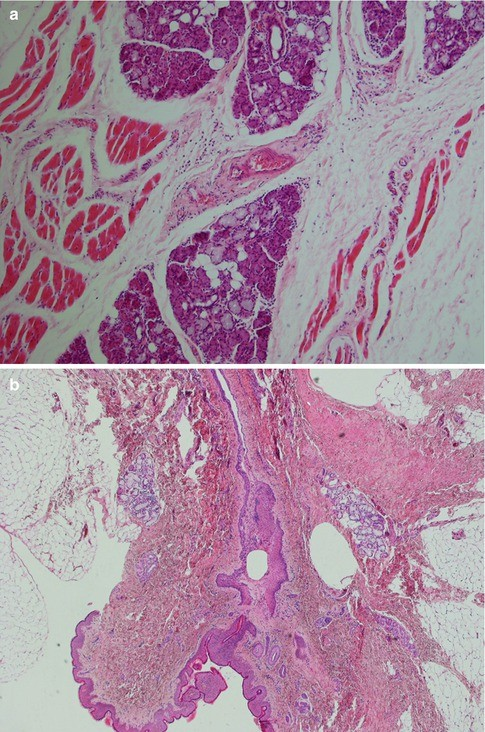 Histology   SpringerLink