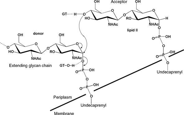 Lipid Intermediates in Bacterial Peptidoglycan Biosynthesis