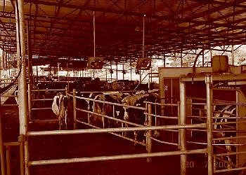 progressive automation animal farmer
