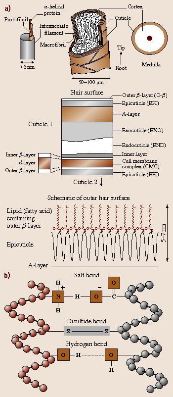 Structural, Nanomechanical, and Nanotribological