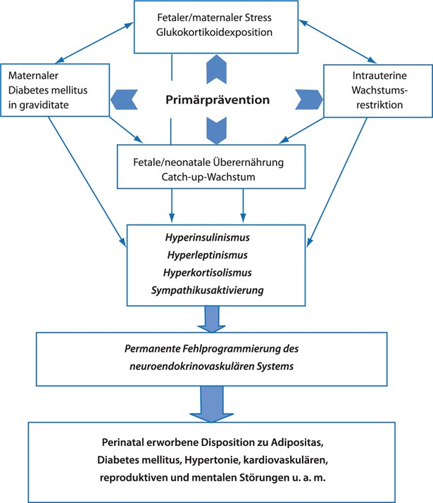 Fetale Programmierung | SpringerLink