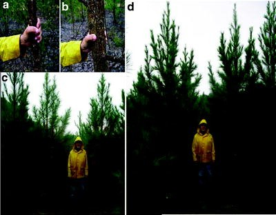 Woody Biomass and Purpose-Grown Trees as Feedstocks for